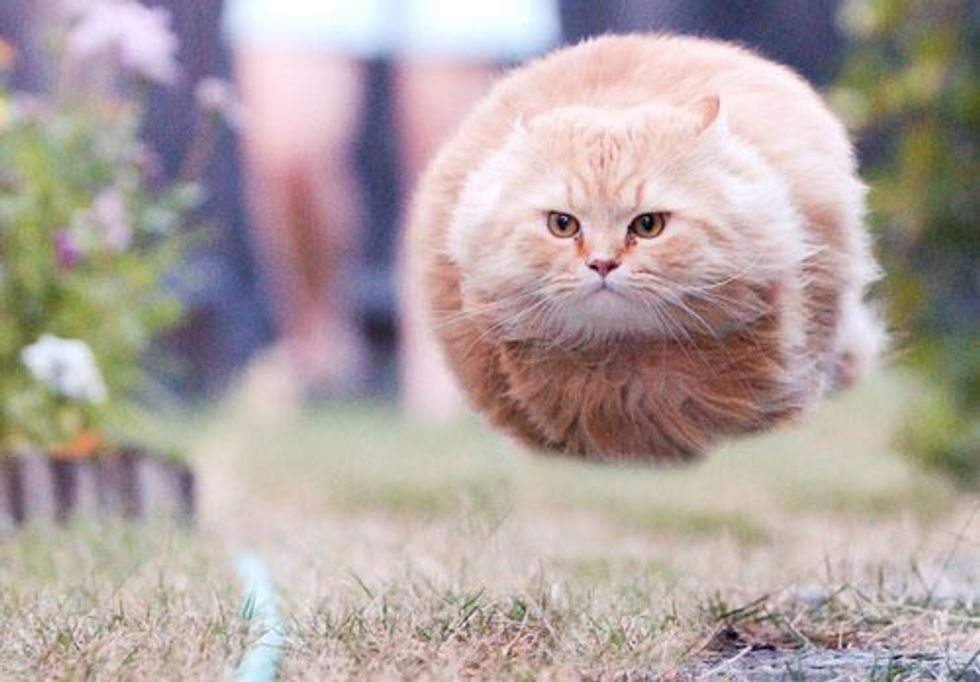 Hoverball Cat