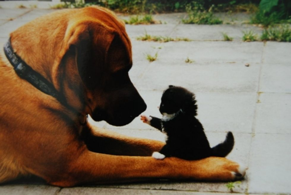 Friendship Between Cats and Dogs