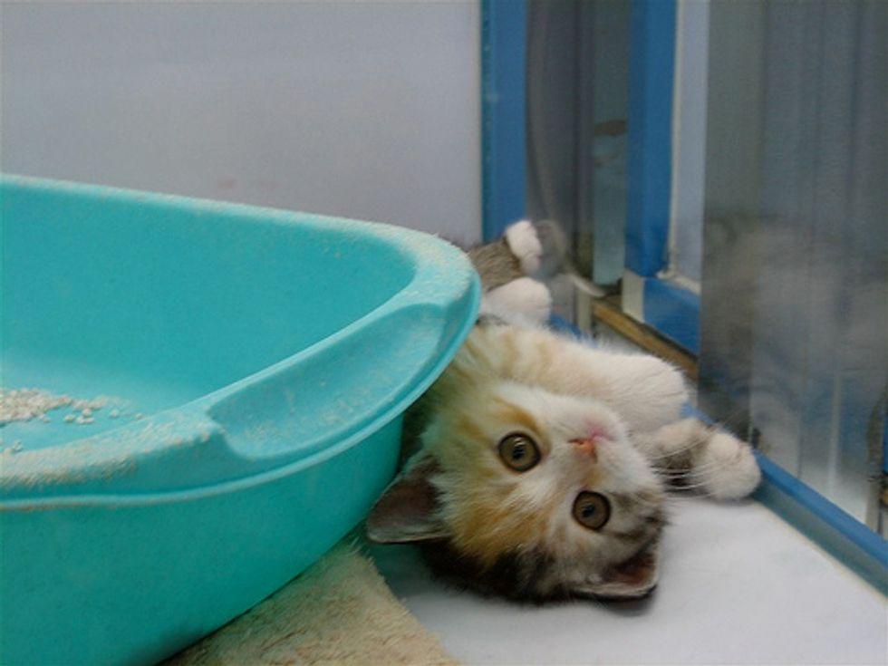 Caturday Kittens