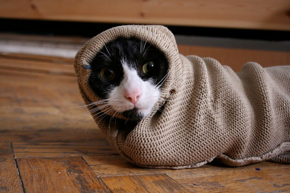 This Tuxedo Kitten Loves to Hide in Sleeves