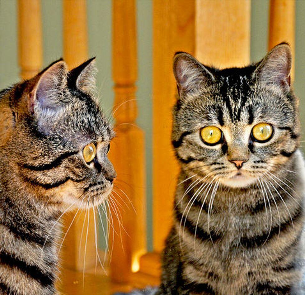Story and Photos of Ksenya the Cat