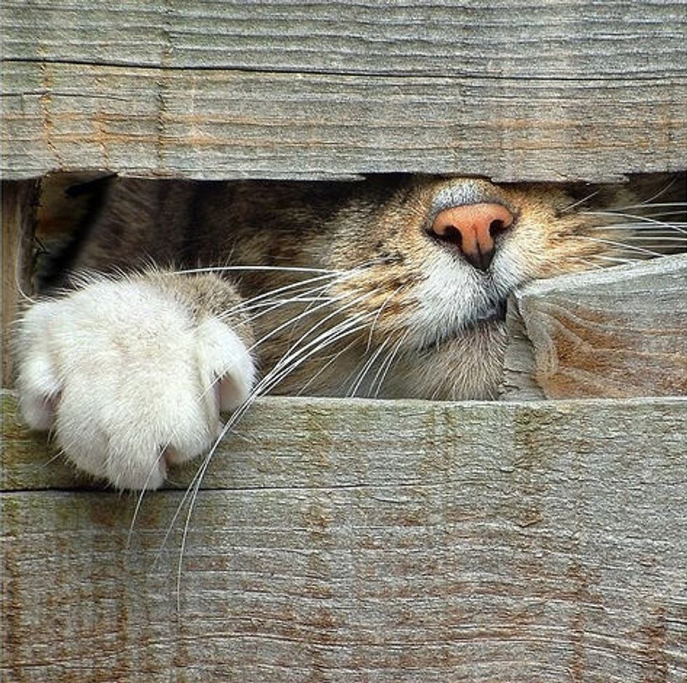 Cats Looking Through Back Gate