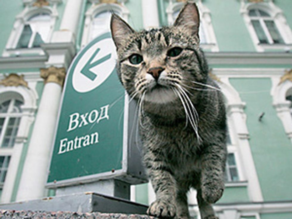 St. Petersburg's Hermitage Museum Holds Tomcat Day