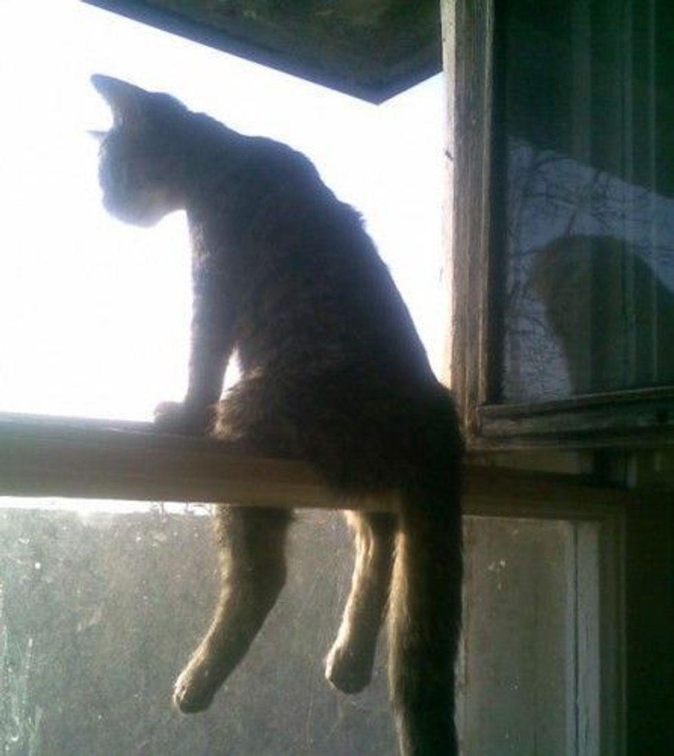The Thinker Cat