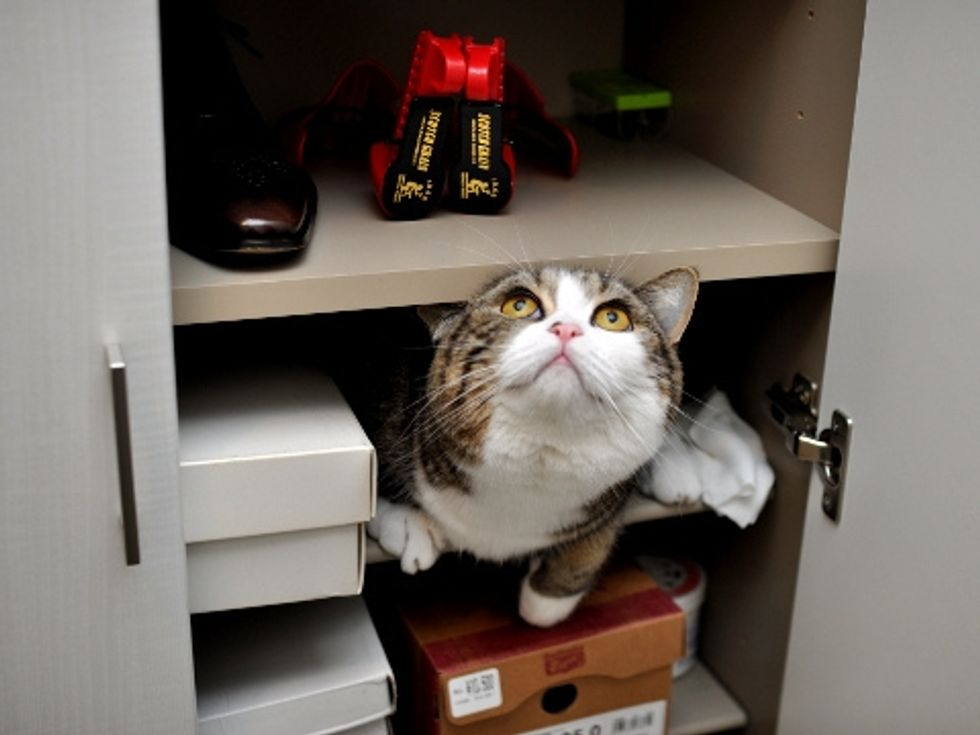 Interview with Maru the Cat