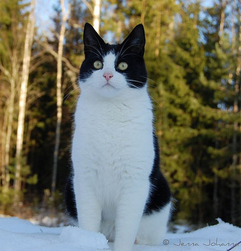 Pixie the Adventurous Tuxedo Cat