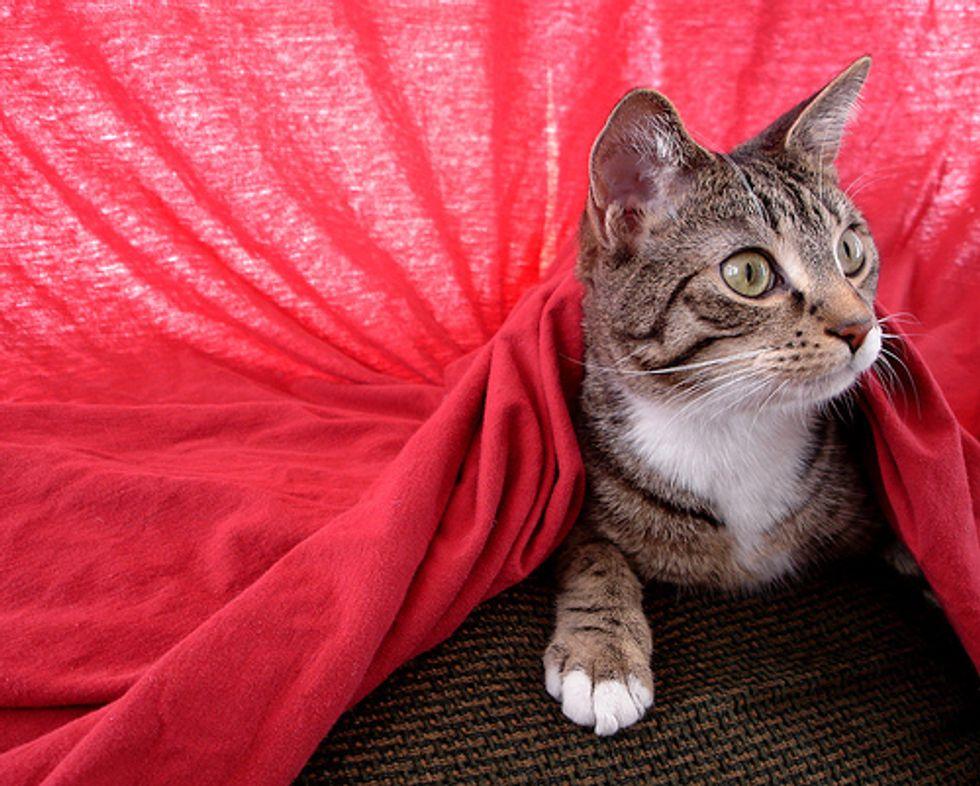 Mischievous Cat Henry
