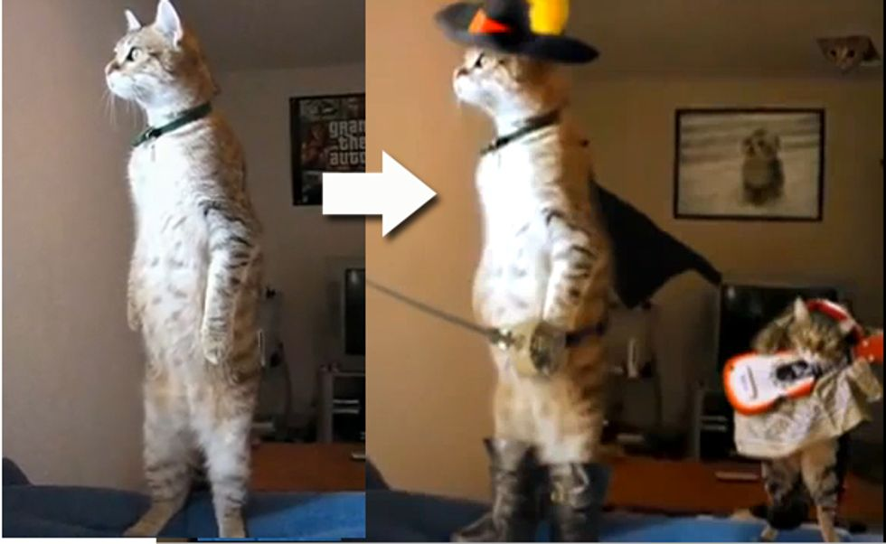 Standing Cat in Boots