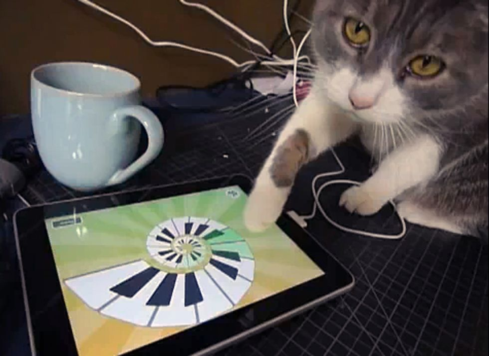 Cat Can Use the iPad