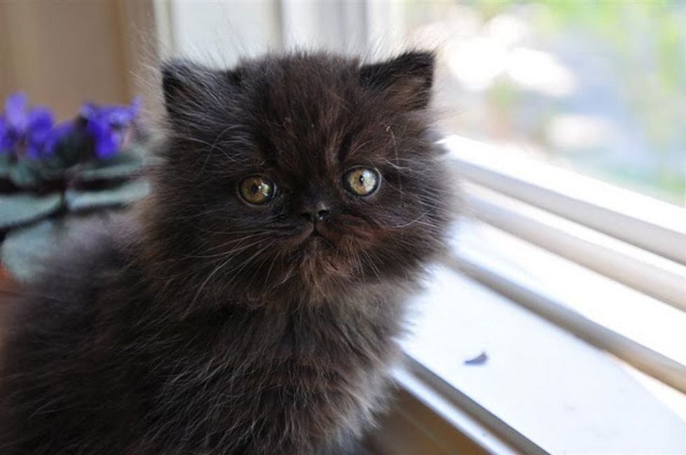 Black Cats are Wonderful