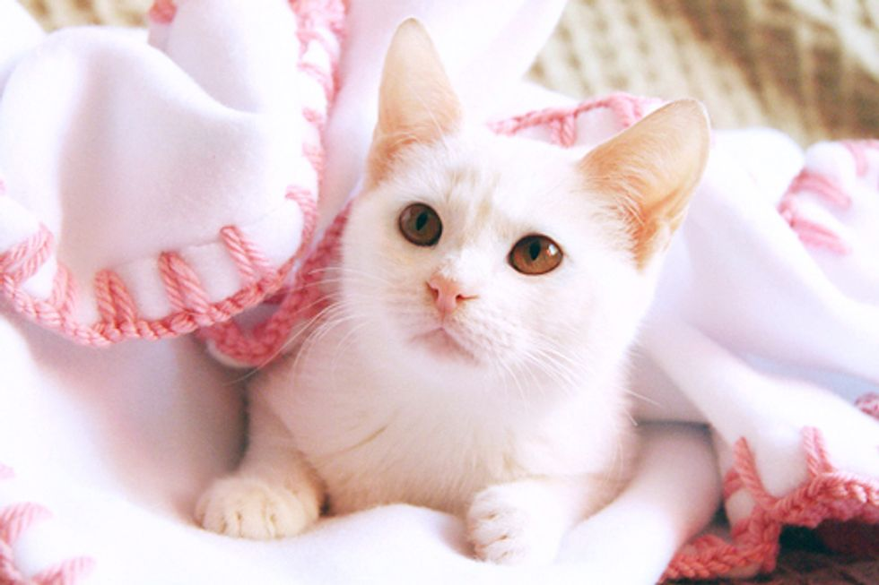 Sakura the Cat and Her Rescue Story