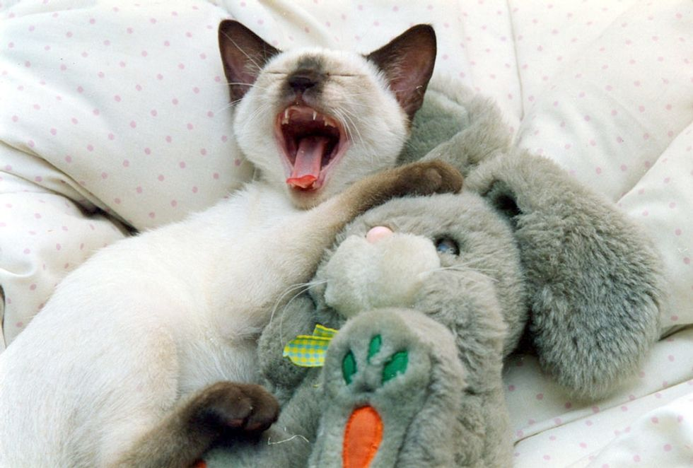 Siamese Kitten and His Bunny Friend