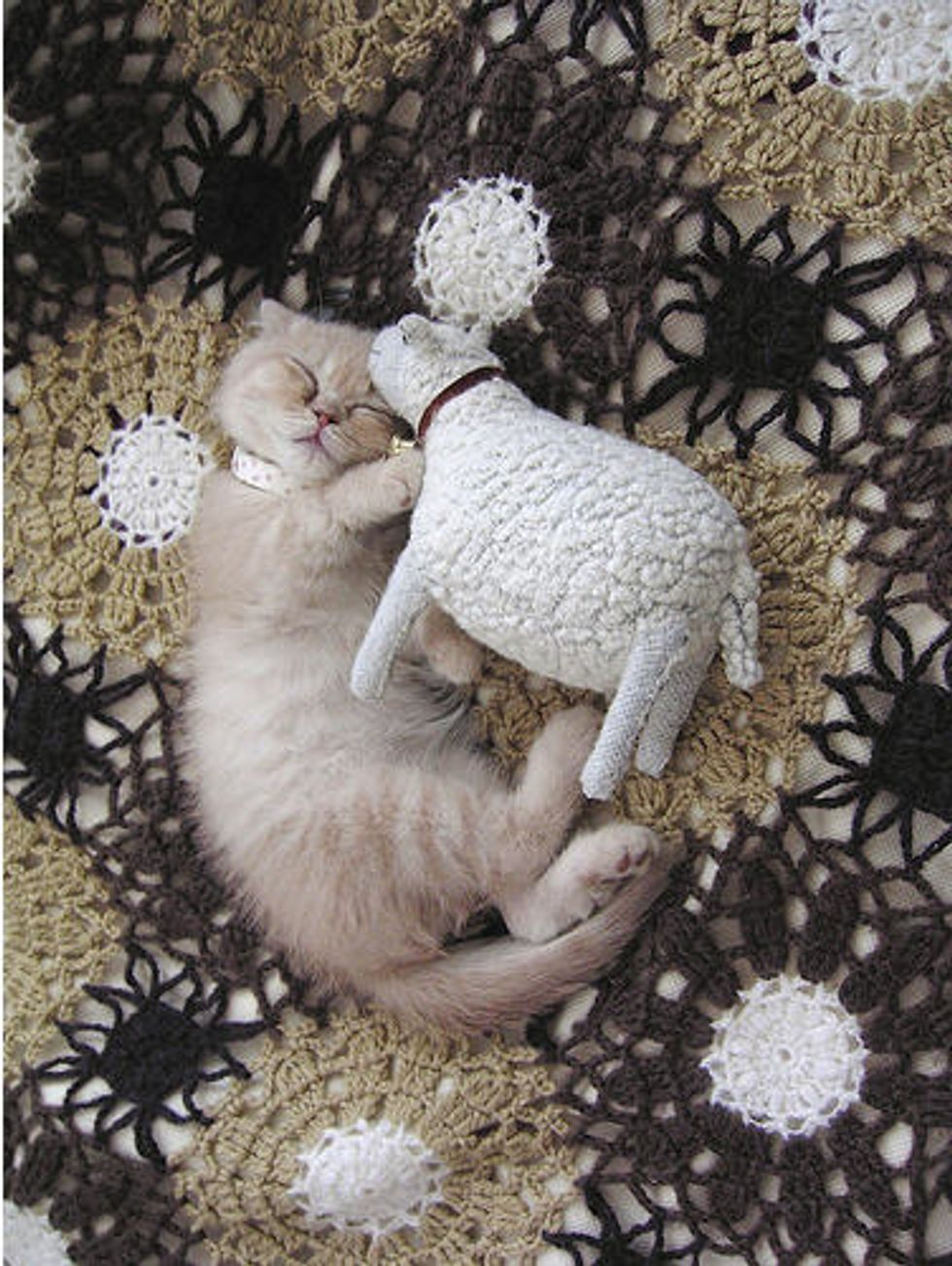 Caturday Kitty