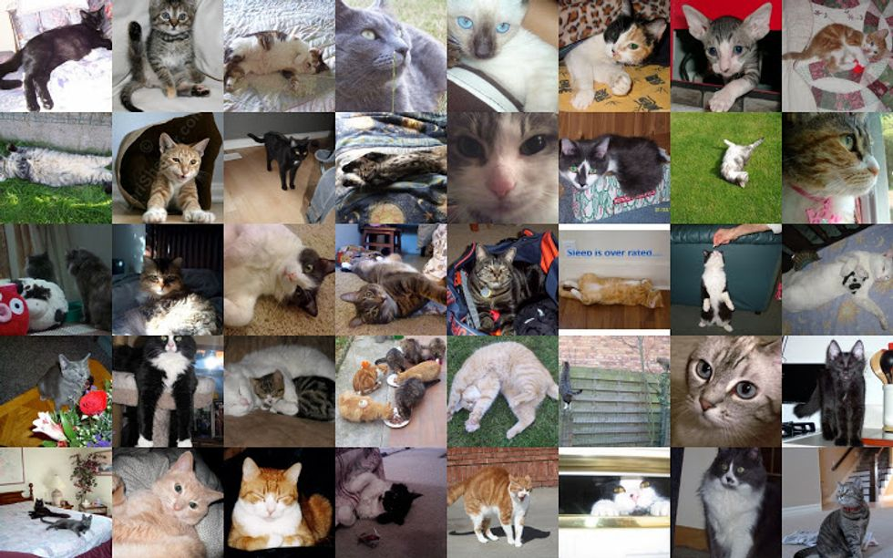 Voting for April Cat / Kitten of the Month Begins