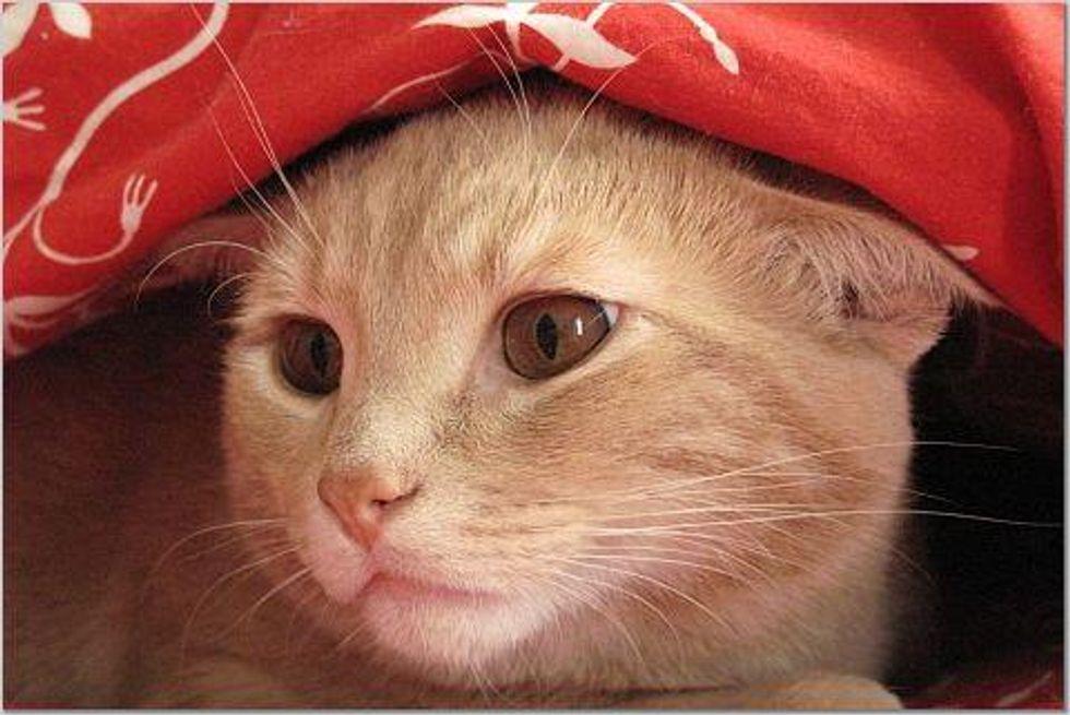 Cat with Mesmerizing Eyes