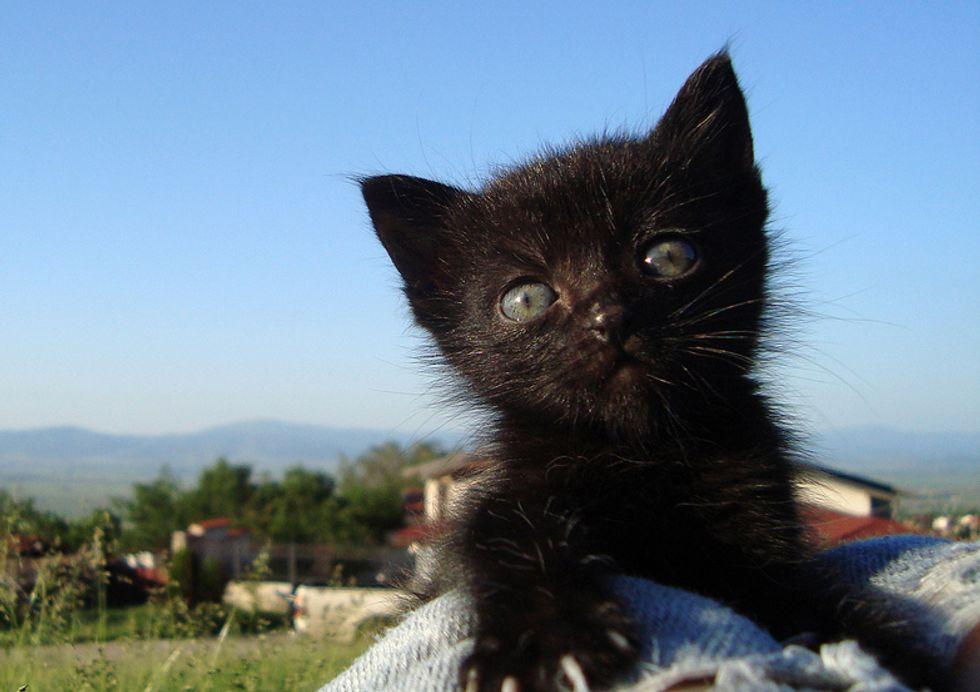 Beloved Black Furry Baby