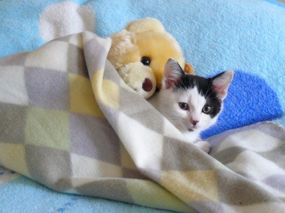 Little Kitten and His Best Friend Teddy Bear
