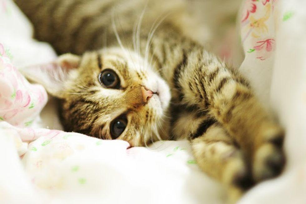 Rescued Tabby Cat Macchiato