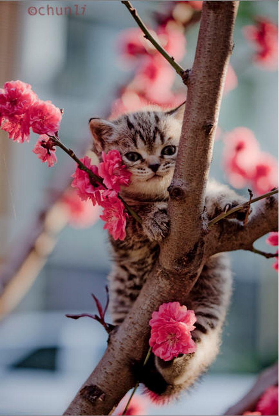 Tree Climbing Kittens