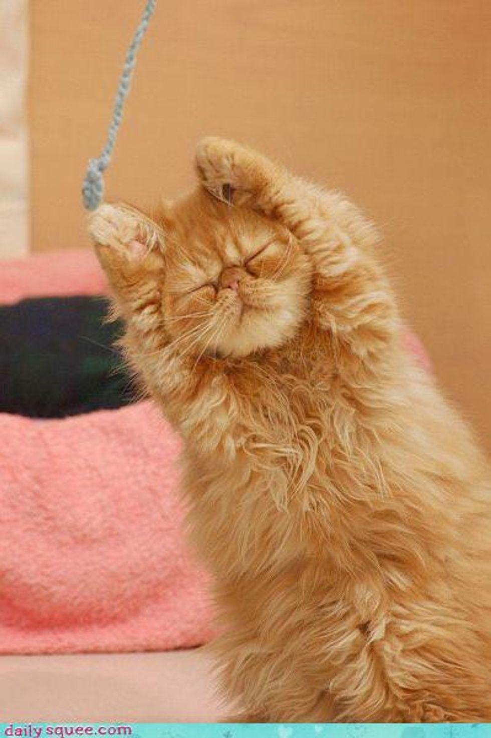Zen Cat Stretching