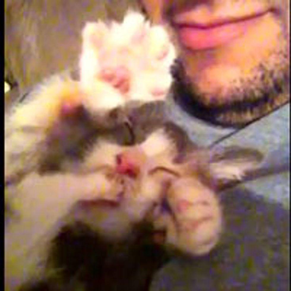 Teeny Tiny Toe-Sucking Kitty