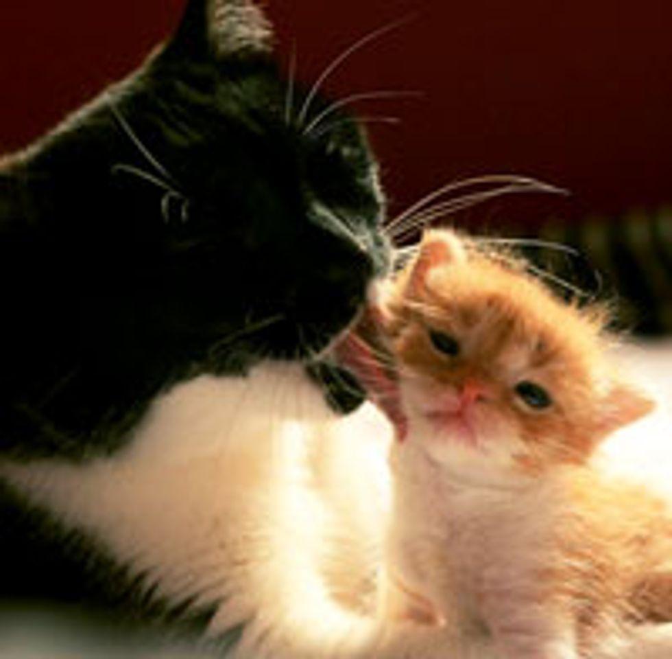 Little Orphan Kitten Finds a New Cat Mama