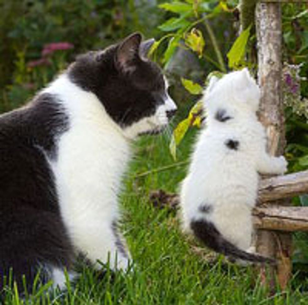 Jack the Blind Kitty Adopts Little Rescue Kitten