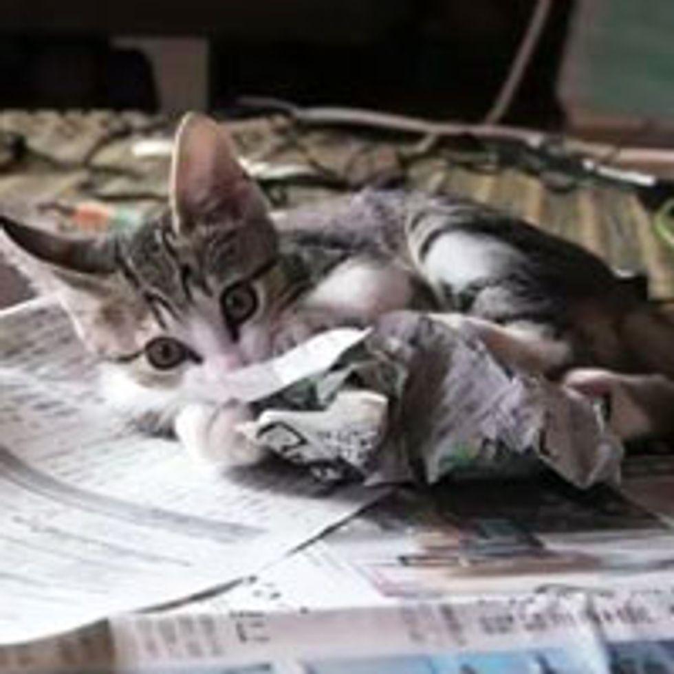 Kitty Attacks Newspaper