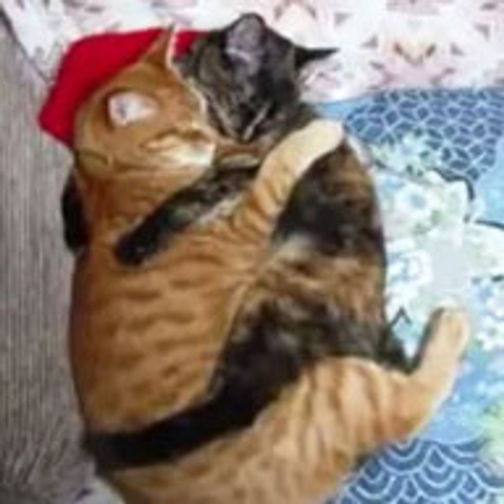 Inseparable Cuddly Best of Furiends