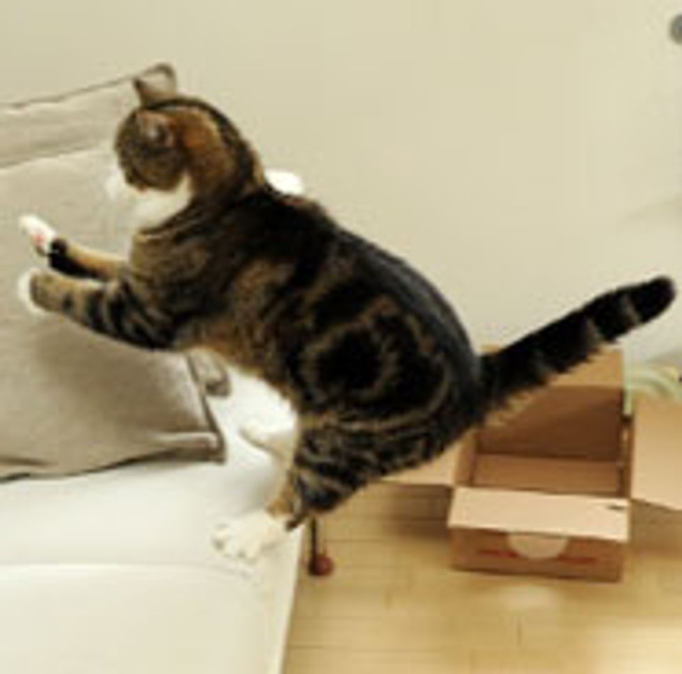 Maru Jumping in Slow Mo
