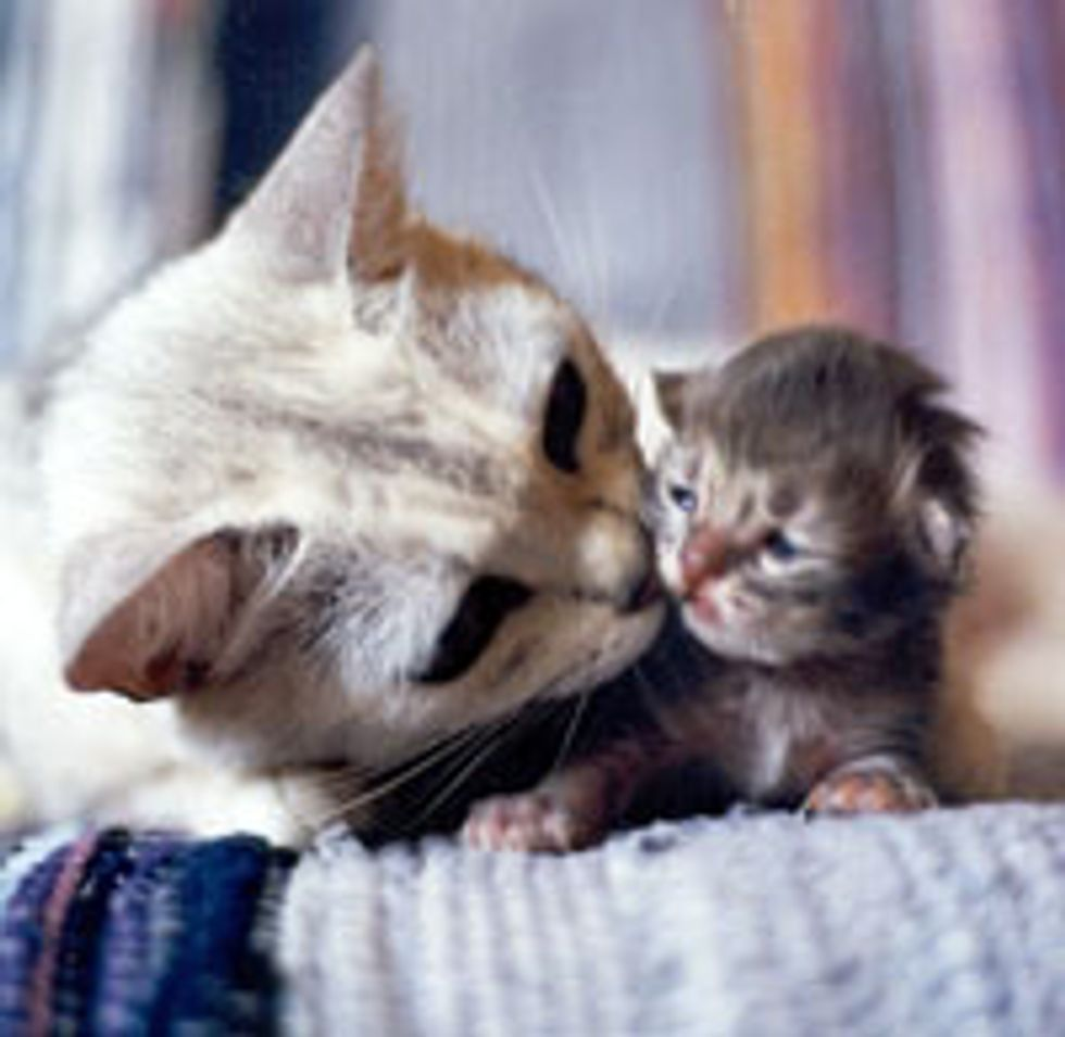 A Mother's Kiss Cures All