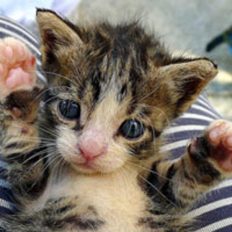Teeny Peek-a-boo Kitty