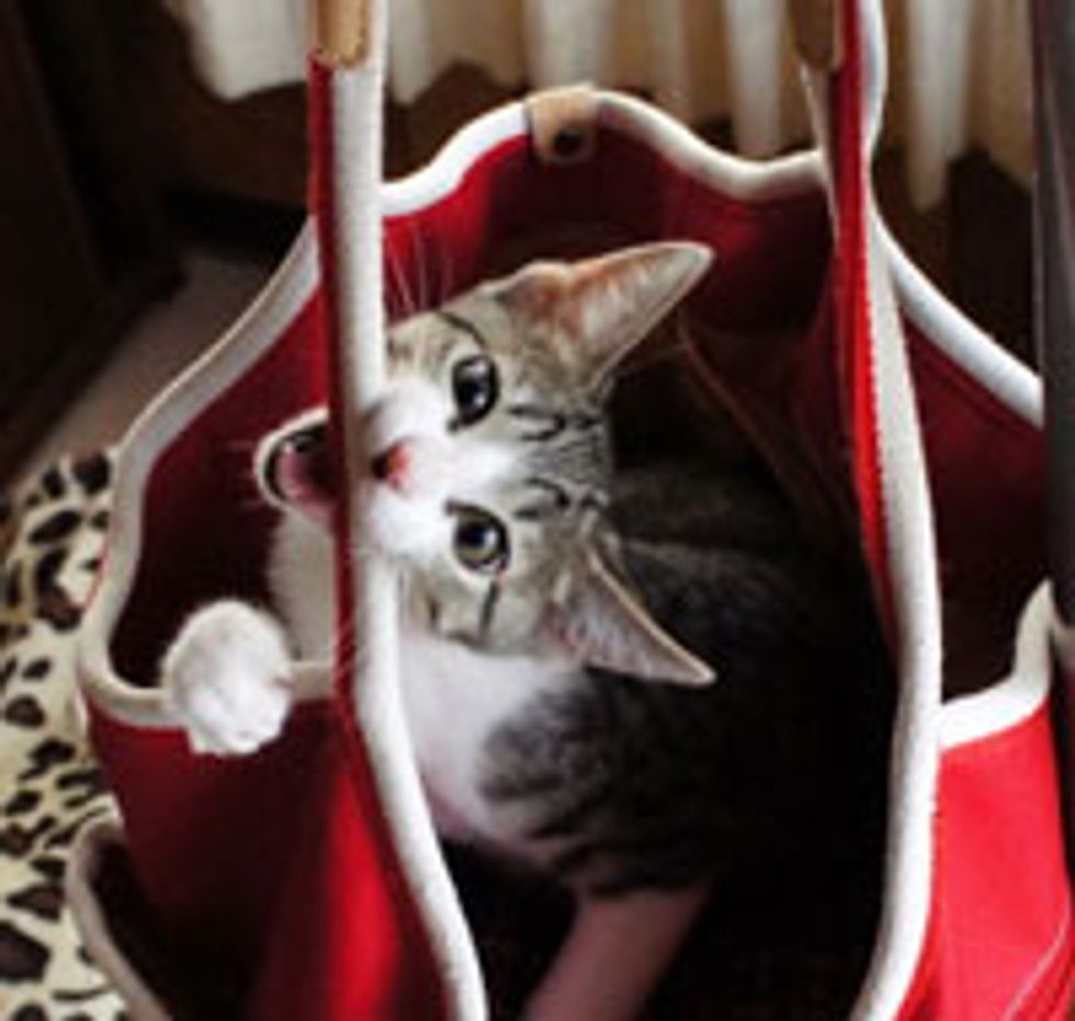 Silly Kitty Turns Bag into Hammock