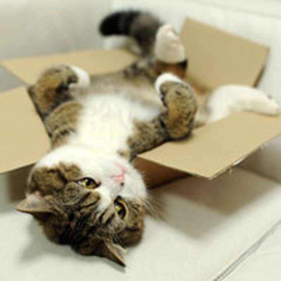 Maru Loves Boxes, Even Broken Ones