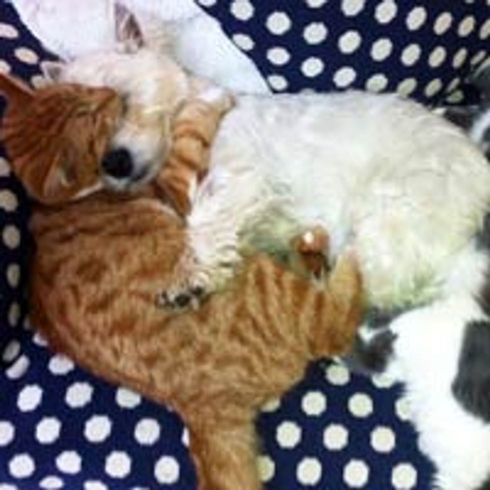 Kitty and Doggie Have a Cuddle