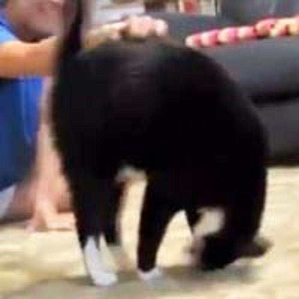 Somersault Kitty