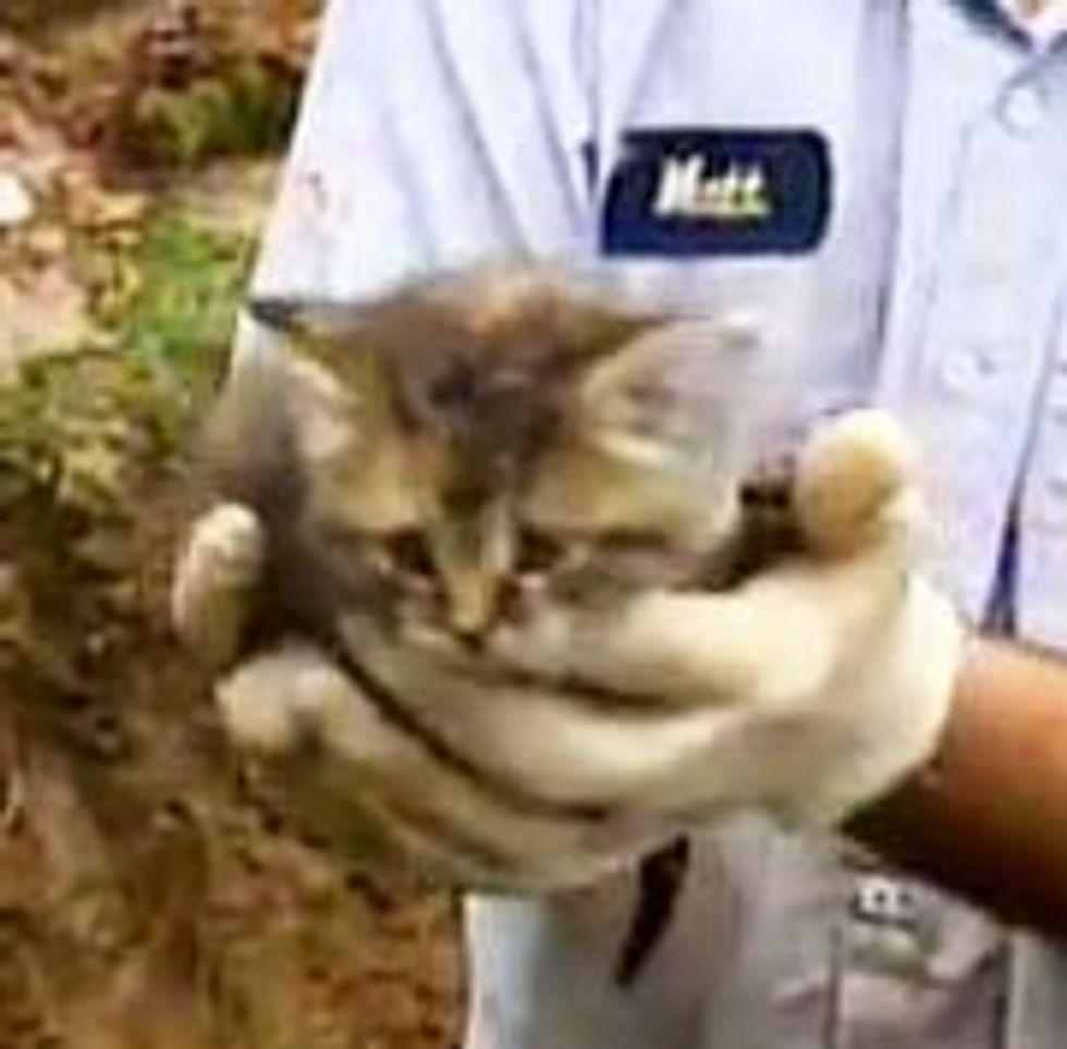 Cute Kitten Rescue Caught on Camera