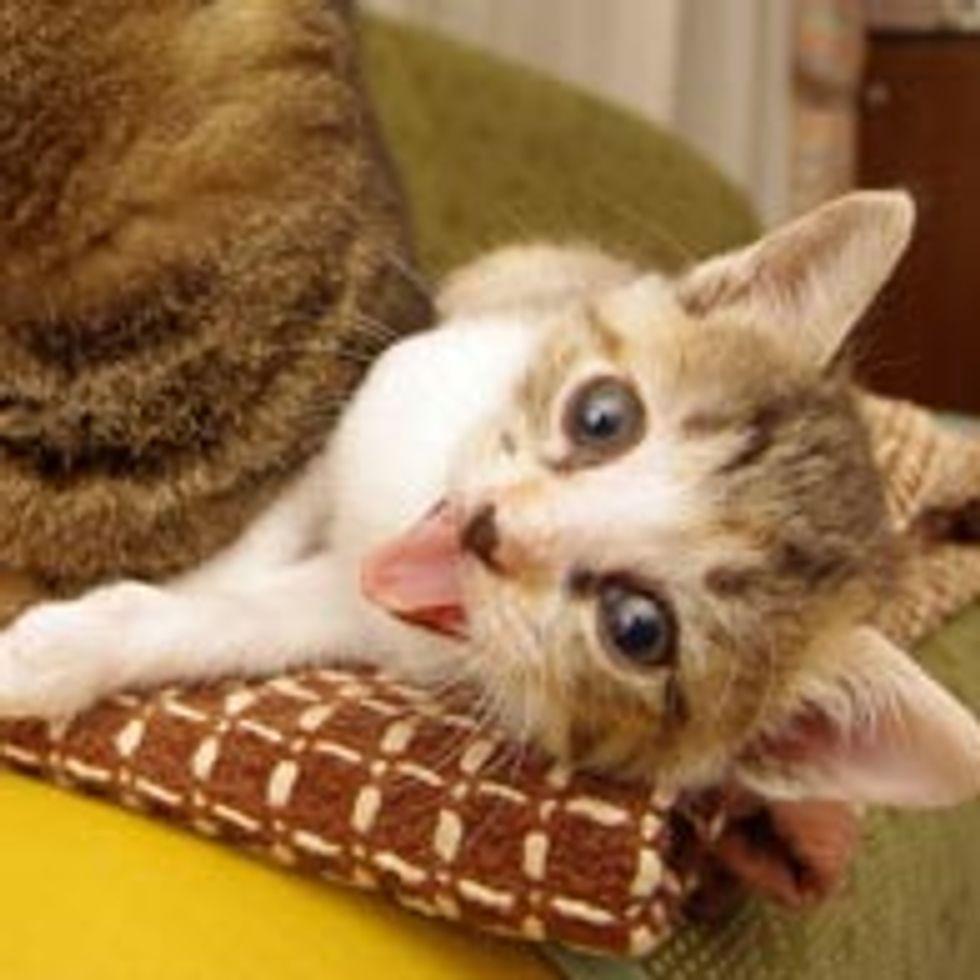 Little Copy Cat