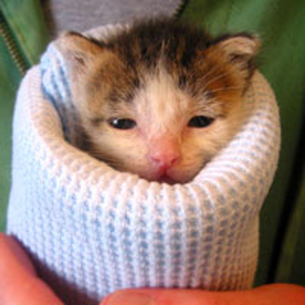 Tiny Foster Kitten Burrito