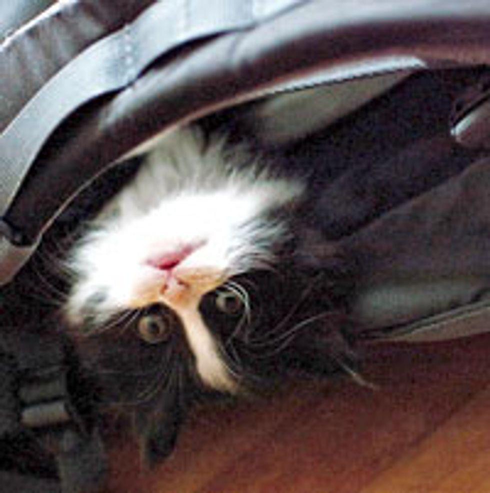 Little Backpack Tuxedo Kitty