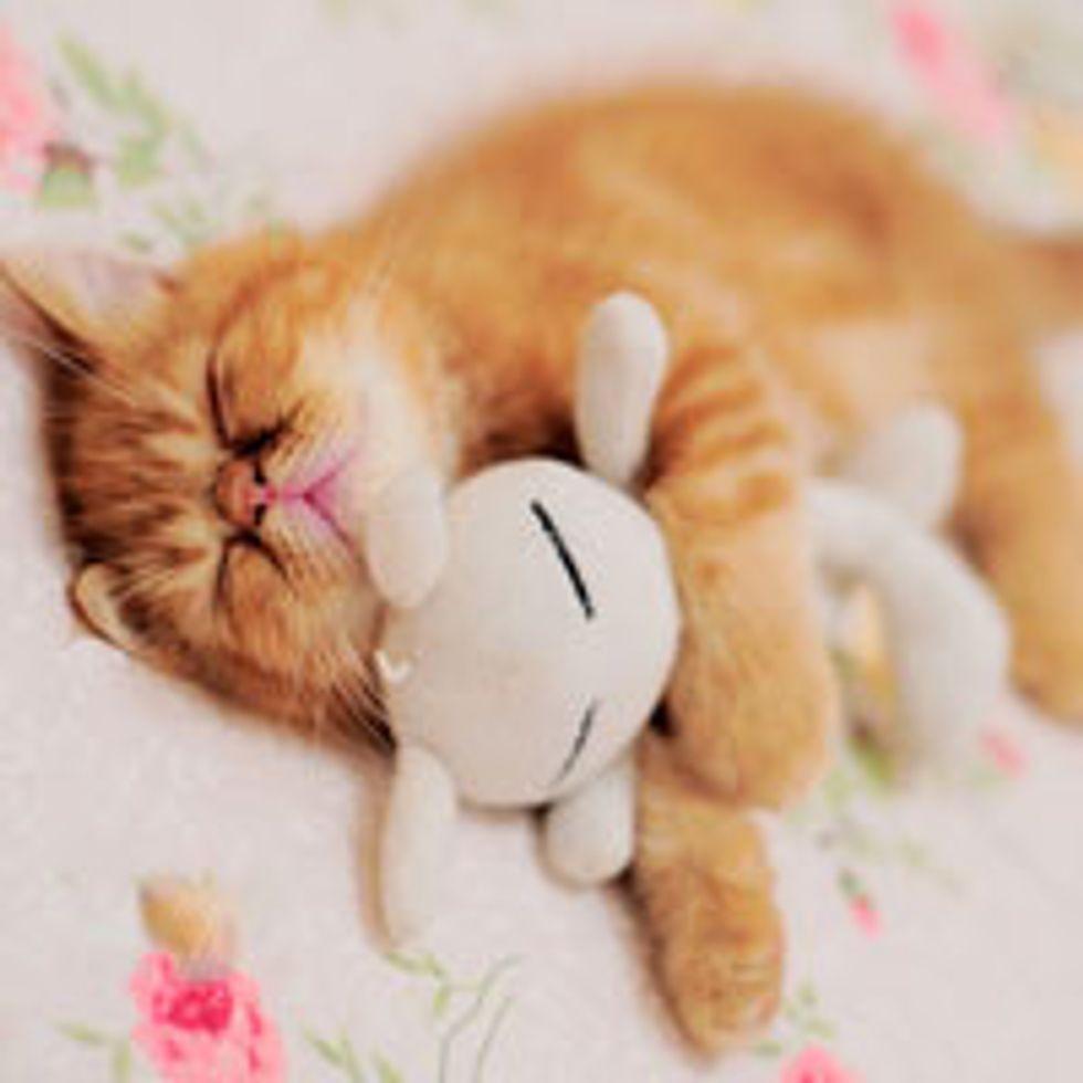 Sleepy Garfield Look Alike