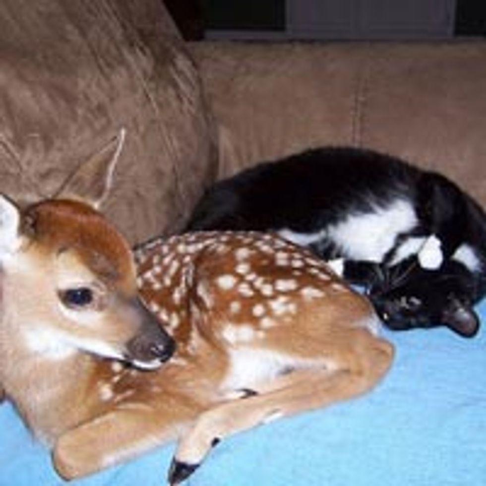 Cat and Deer, Best of Friends