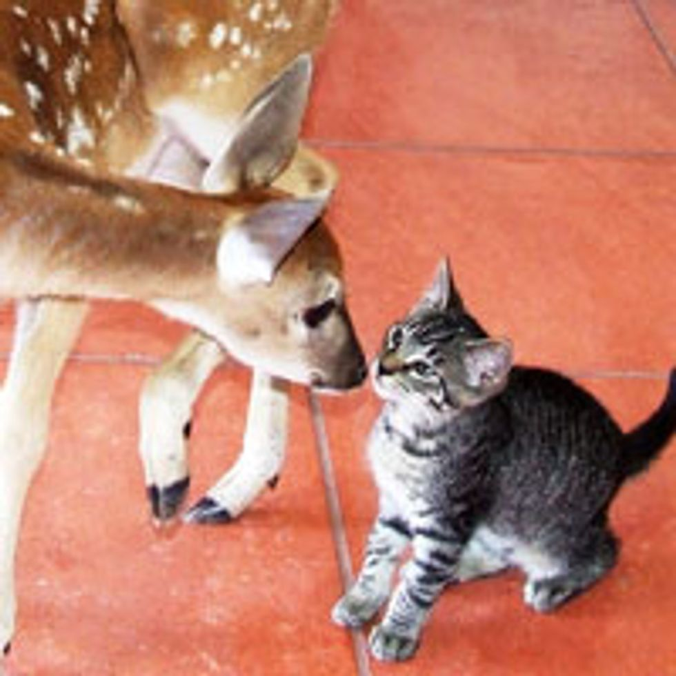 Kitty and Deer, Friendship Starts with a Kiss
