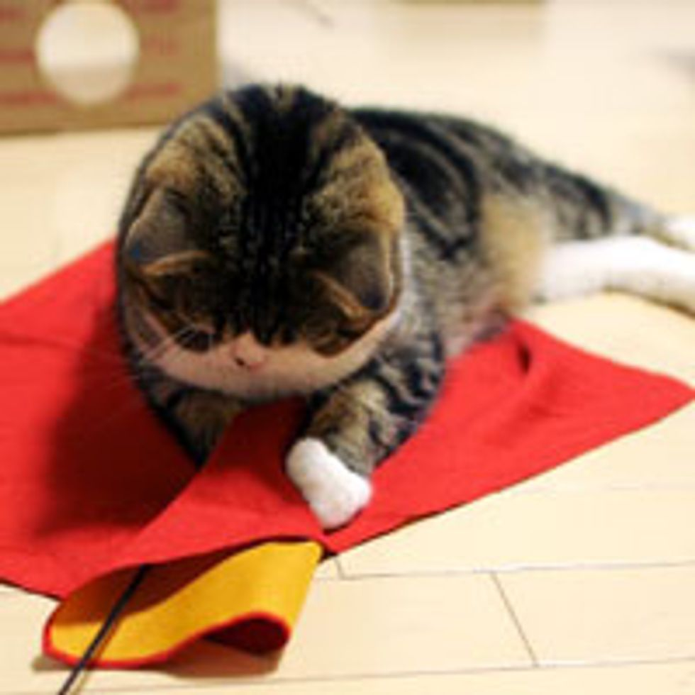 Maru Playing with Red 'Toy'