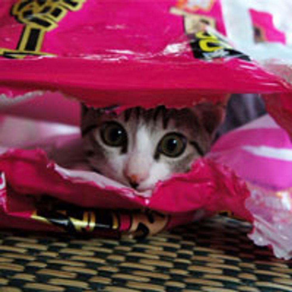 Kitty's Plastic Bag Frenzy