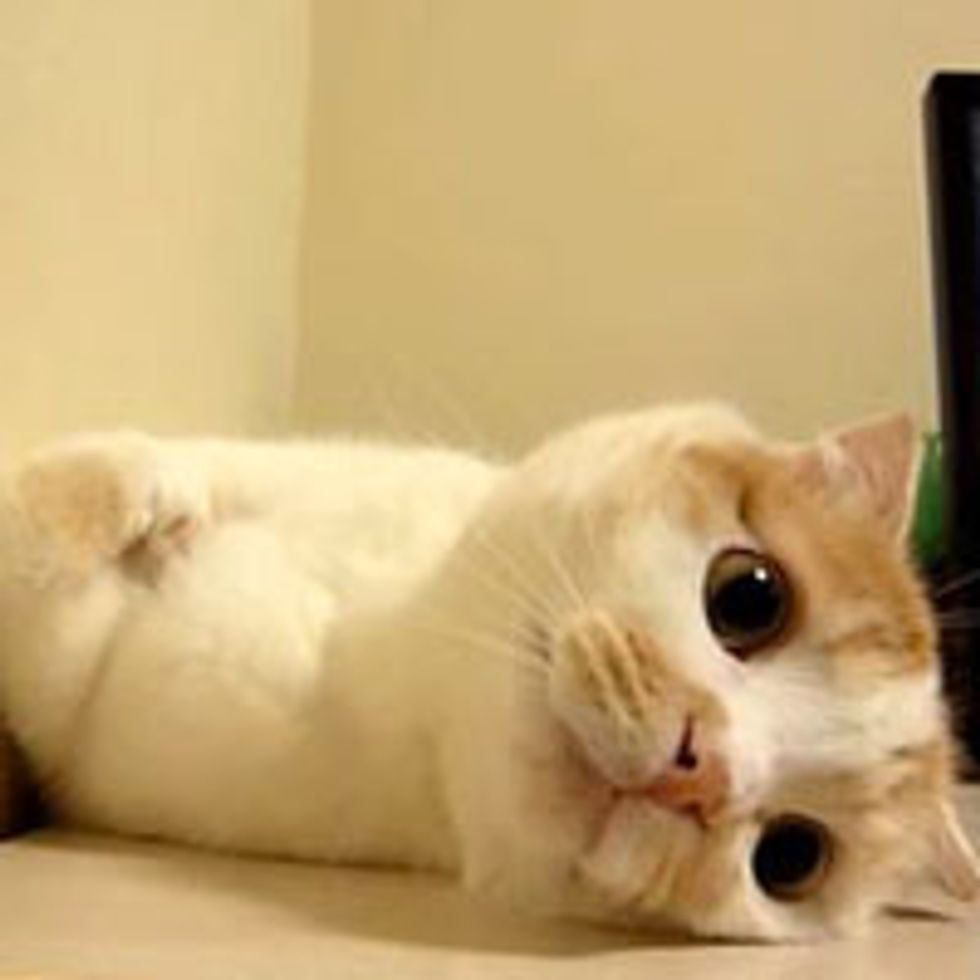 Pokke the Kitty Supervisor