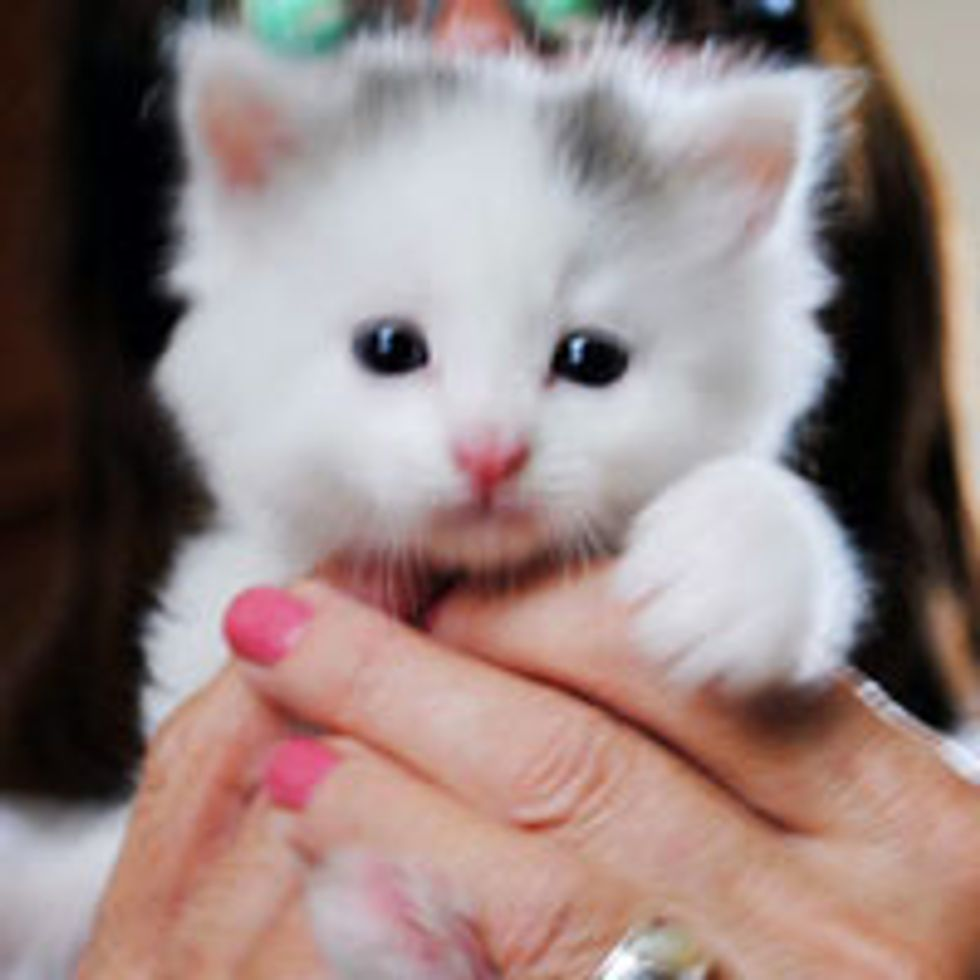 Fuzzy White Kitten Meows Her Way into Forever Home