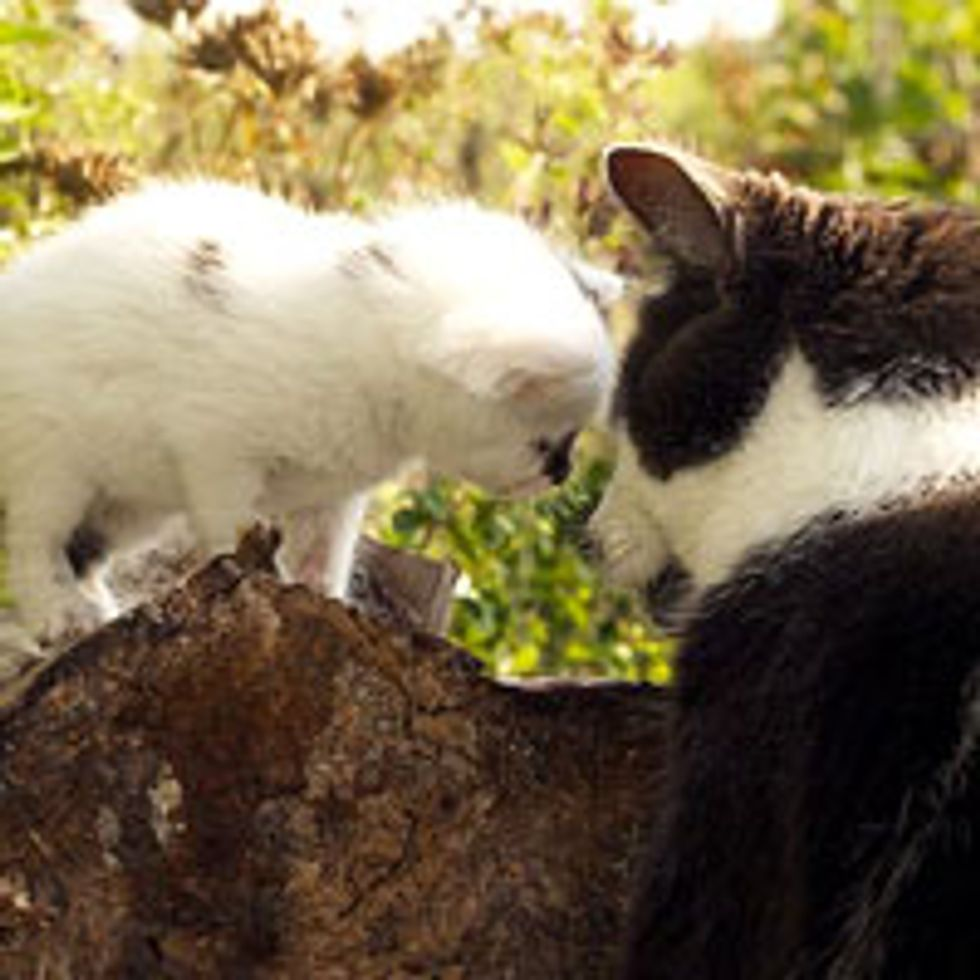 Love Between Blind Kitty and Rescue Cow Kitten