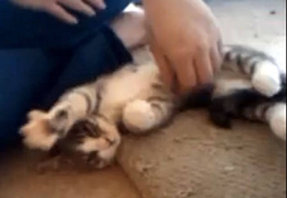 Kitty Kneading in the Air