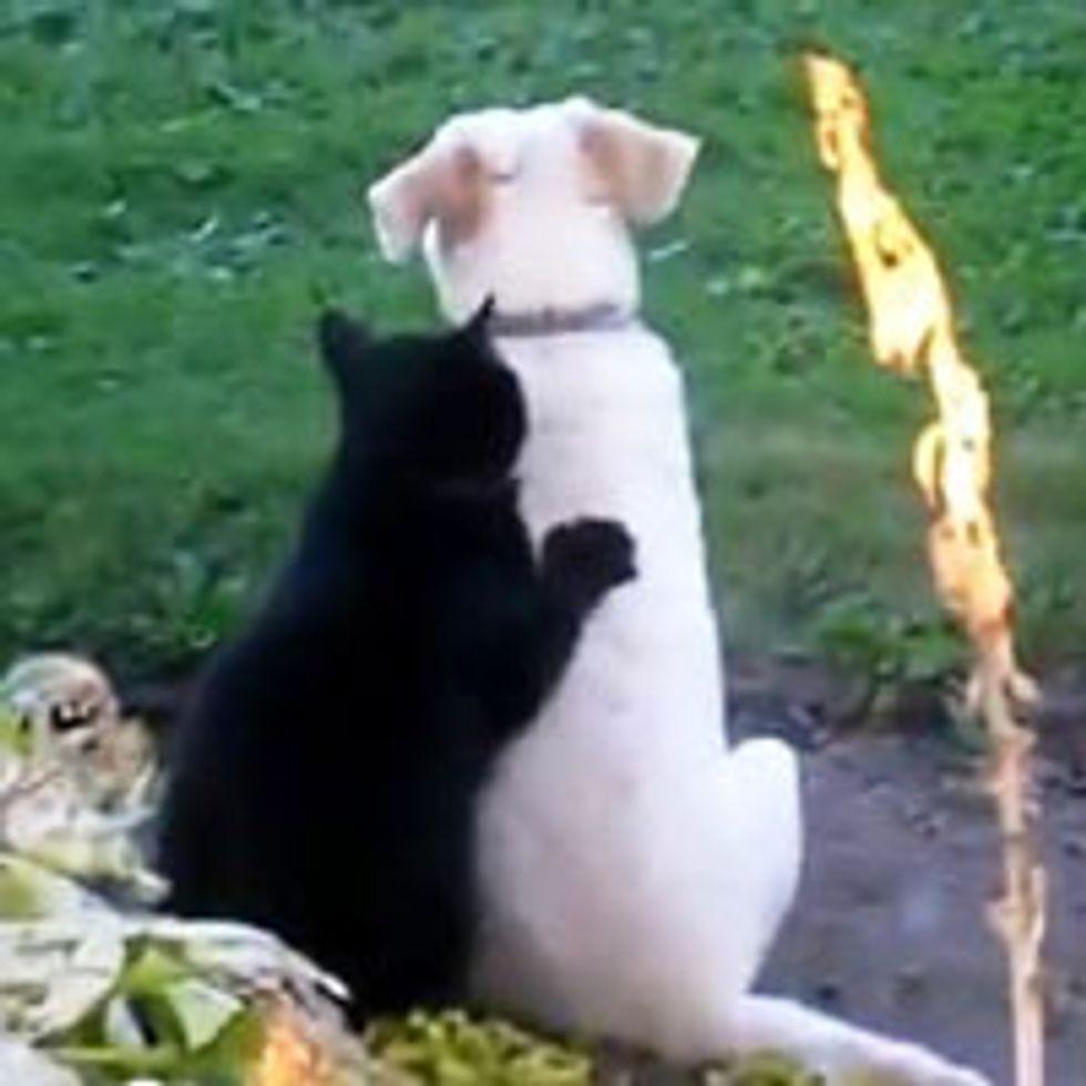 Kitty Gives Doggie a Massage